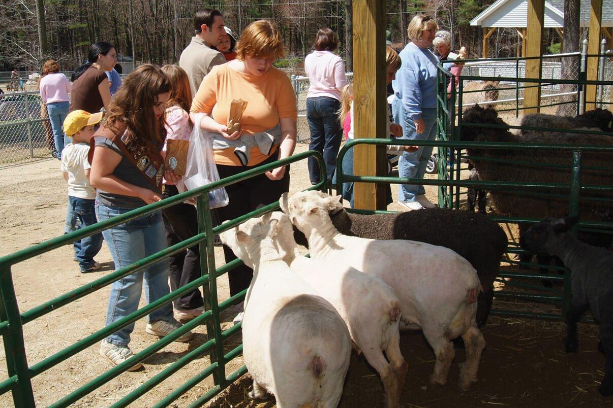 Petting Zoo Farmyard animals